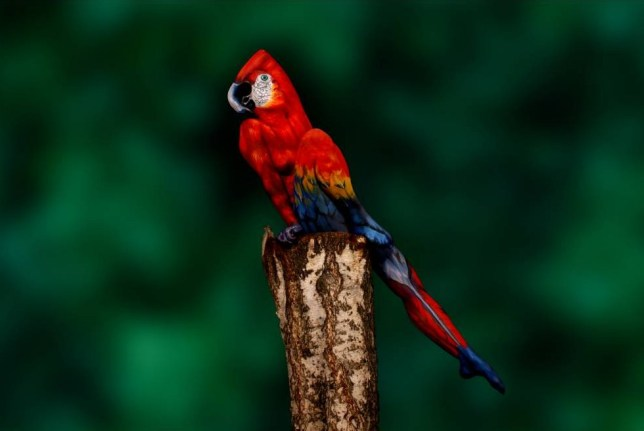 Artist turns human body into canvas to create amazing parrot illusion