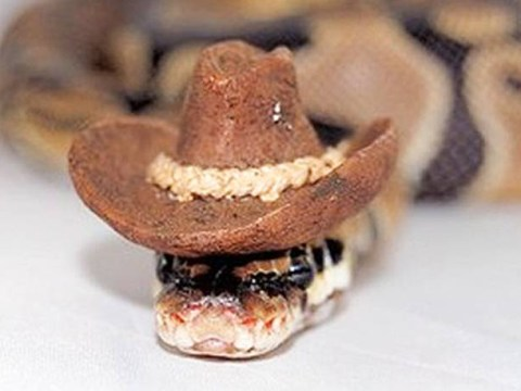 Forget cats, today it's all about snakes wearing hats