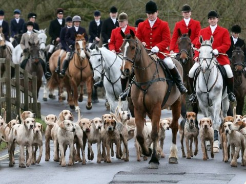 David Cameron 'regrettably' drops plans to relax the fox hunting ban