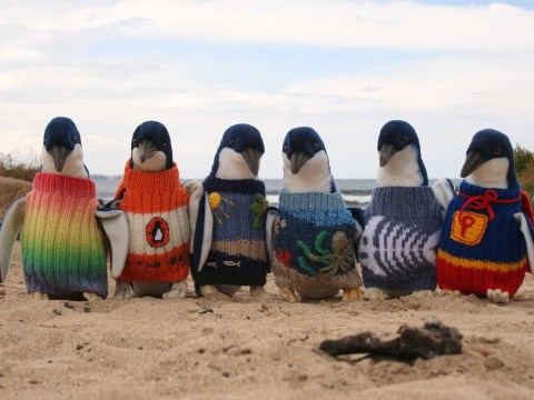 Wanted: Volunteers to knit little woolly jumpers for poorly penguins