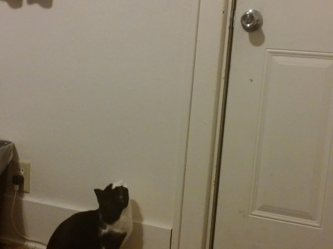 Laziest person in the history of humanity gets cat to turn light off with help of laser pen