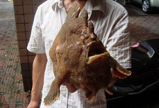 The mystery fish: it's just begging to be turned into a LOLfish
