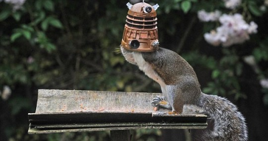 Squirrel Dalek nuts