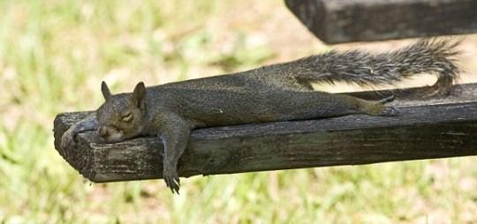 squirrel planking Joanne Williams