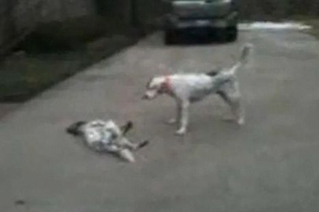 Dog faking own death