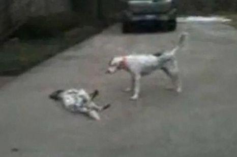 Dog faking own death