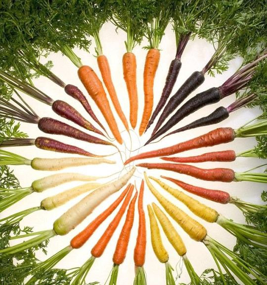 Multicoloured carrots