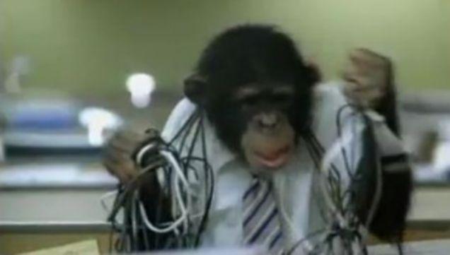 careerbuilder.com, Super Bowl, advert, chimpanzee