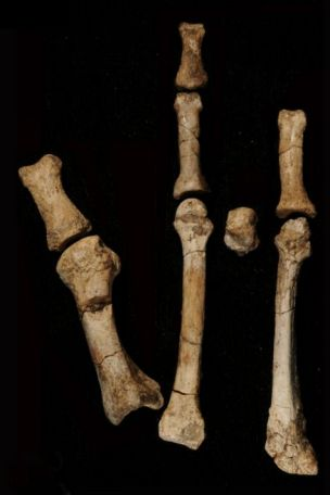 bones from the foot of a 3.4million-year old hominin