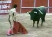 The bullfighter in action