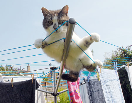 Cats without claws would struggle to climb a washing line
