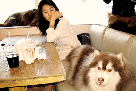 A dog's life: Seoul's Bau House welcomes canines as guests
