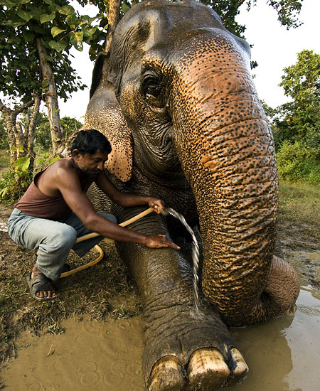 Vatsala elephant