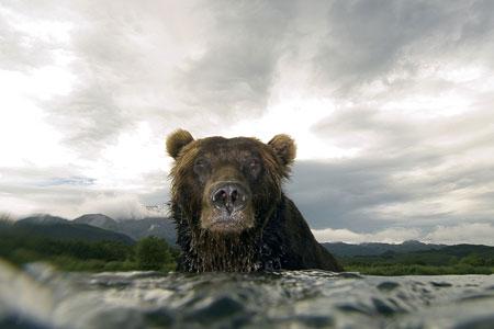 Shell Bear photograph