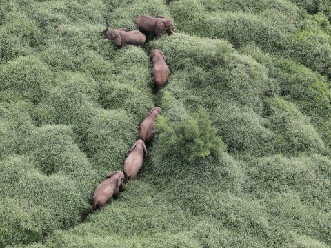 Eye in sky tracks the elephants: The hunters become the hunted in Kenya