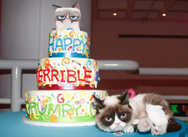 Enjoyable Grumpy Cat Celebrates Second Birthday With Party In New York Funny Birthday Cards Online Elaedamsfinfo