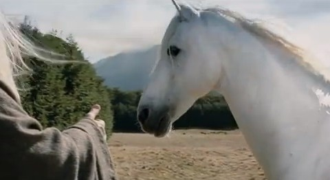'The lord of all horses': Much-loved Lord of the Rings horse Shadowfax dies