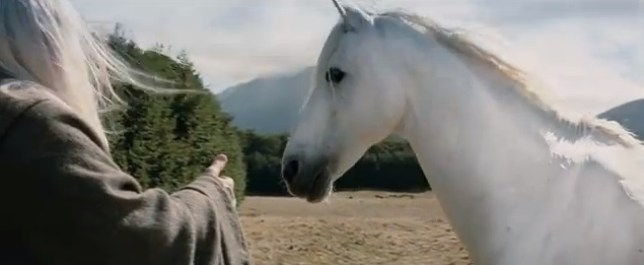 'The lord of all horses' (Picture: YouTube)
