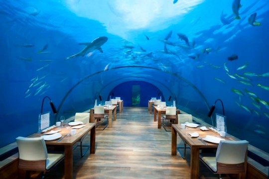 PIC FROM CATERS NEWS - (PICTURED: The restaurant) - DEEP sea diners enjoy a meal surrounded by sharks at the world's only underwater restaurant. Ithaa in the Maldives sits three metres below the surface of the Indian Ocean in a vibrant coral garden. The all-glass structure - which consists of three five-metre wide, 125mm thick glass arches - allows diners to scoff caviar as sharks and sting-rays swim by
