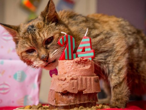 Poppy, the world's oldest cat, dies just weeks after clinching title at the age of 24
