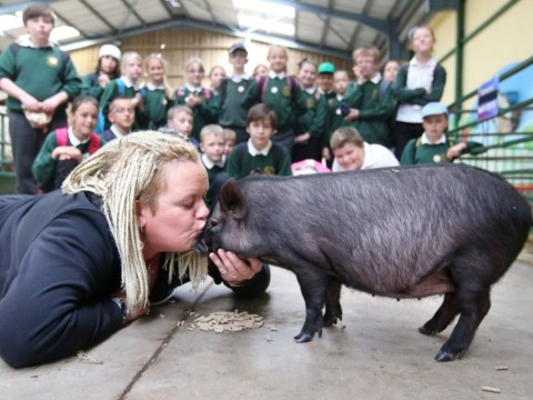School teacher kisses pig after pupils win attendance award