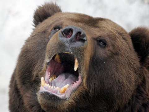 Woman survives vicious bear attack by playing dead