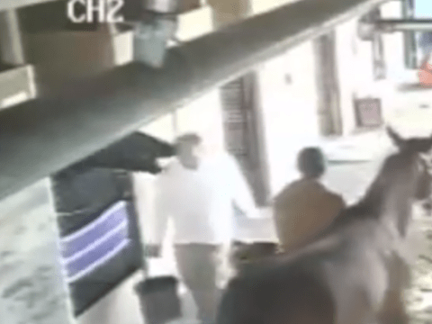 Horseplay in the stable: Stallion headbutts man carrying water (and demonstrates impeccable comic timing)
