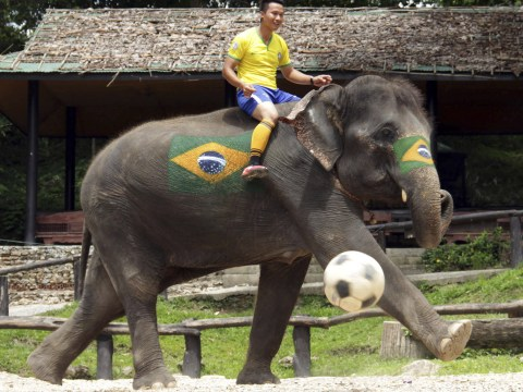Elephant world cup 2014 kicks off