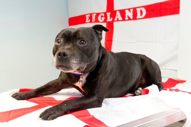 Rooney has received care from PDSA vets.jpg