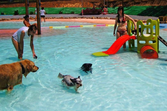 Resort Canino Can Jane: Dog swimming pool opens in Barcelona ...