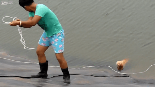 Soggy moggy rescued from Thailand reservoir in LiveLeak video