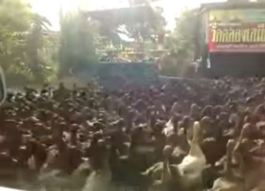 The Duck Rising 2014 (Picture: YouTube)