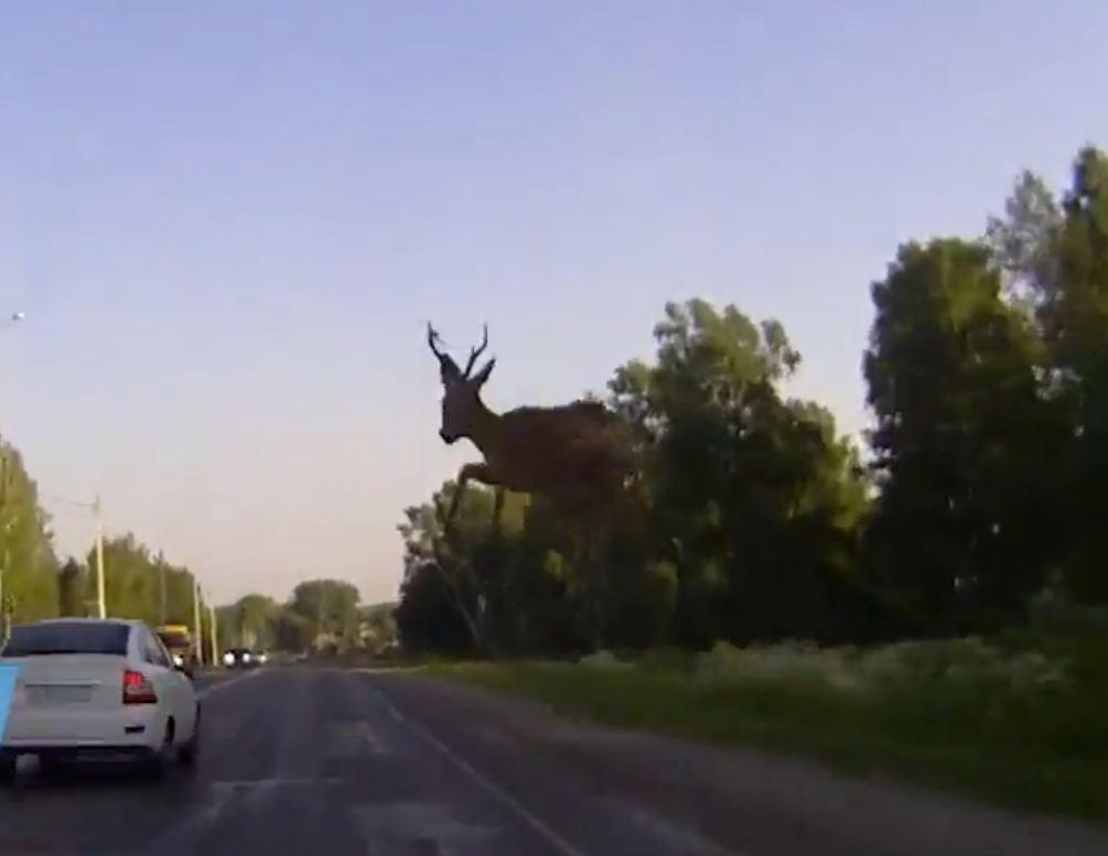 LiveLeak video captures flying deer crash through windscreen