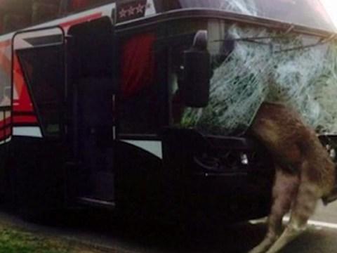 Bus strikes 'Devil Moose' just as speedometer hits 666