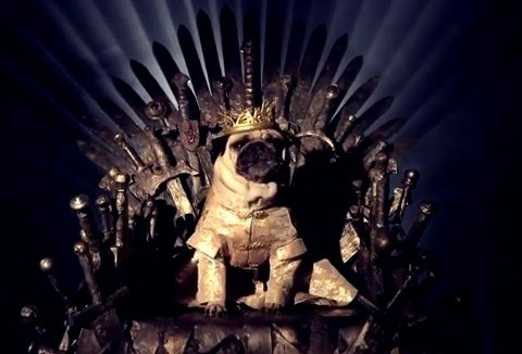 Pugs dress up as Game of Thrones characters for short film The Pugs of Westeros