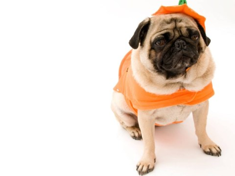 Is it to be or not to be: Kickstarter campaign to tell Hamlet through the medium of pugs