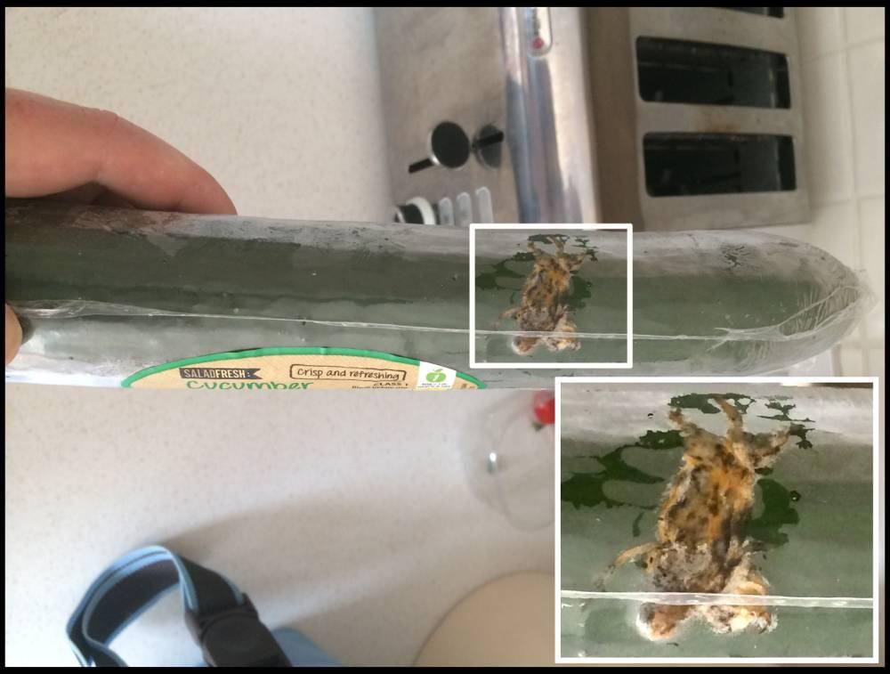 Lizard found in Aldi cucumber 'nearly fed to grandson'
