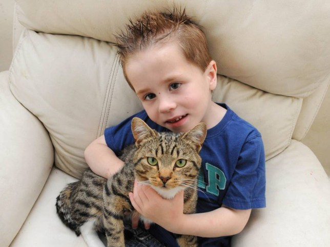 (MANDATORY BYLINE - JOANNA HUFTON/MERCURY PRESS. PICTURED IS ETHAN WITH HEROIC CAT SMUDGE) A heroic cat came to the rescue of his young owner by JUMPING on bullies picking a fight. Smudge sprang into action and pounced onto the chest of one bigger boy when he saw frightened Ethan pushed to the ground. The boy and his friends were so shocked by the tabby cat's actions that they ran away crying leaving Ethan Fenton, five, and his two-year-old brother Ashton alone. SEE MERCURY COPY.