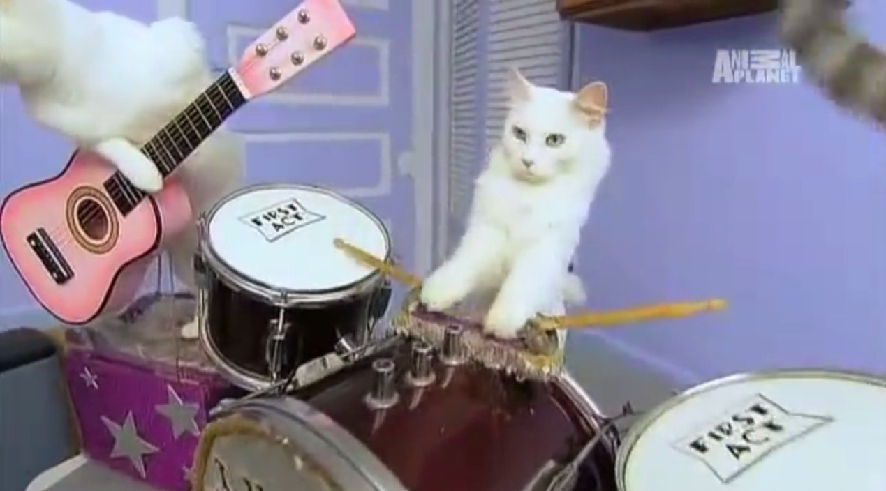 A travelling cat circus, a chicken on percussion and homes for 142 stray cats: What's not to love?