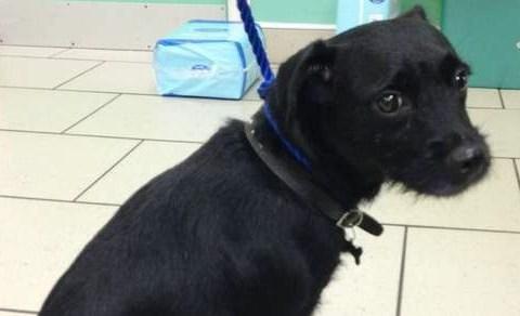 Loyal dog stands guard over owner after violent attack