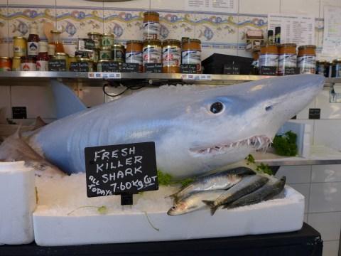 Sharknado attack! Shoppers fall hook, line and sinker for 'fresh killer shark' gag in fishmongers