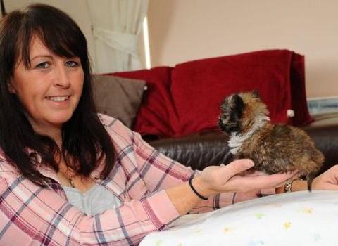 Meet Tyson, Britain's smallest dog