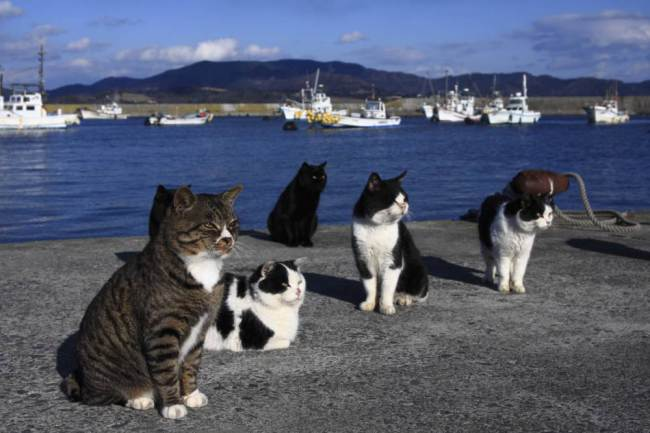 cat island GETTY