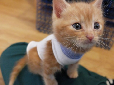 Cats in socks, aphrodisiac cafe and a swarm of robots: A window on the world on 15 August 2014
