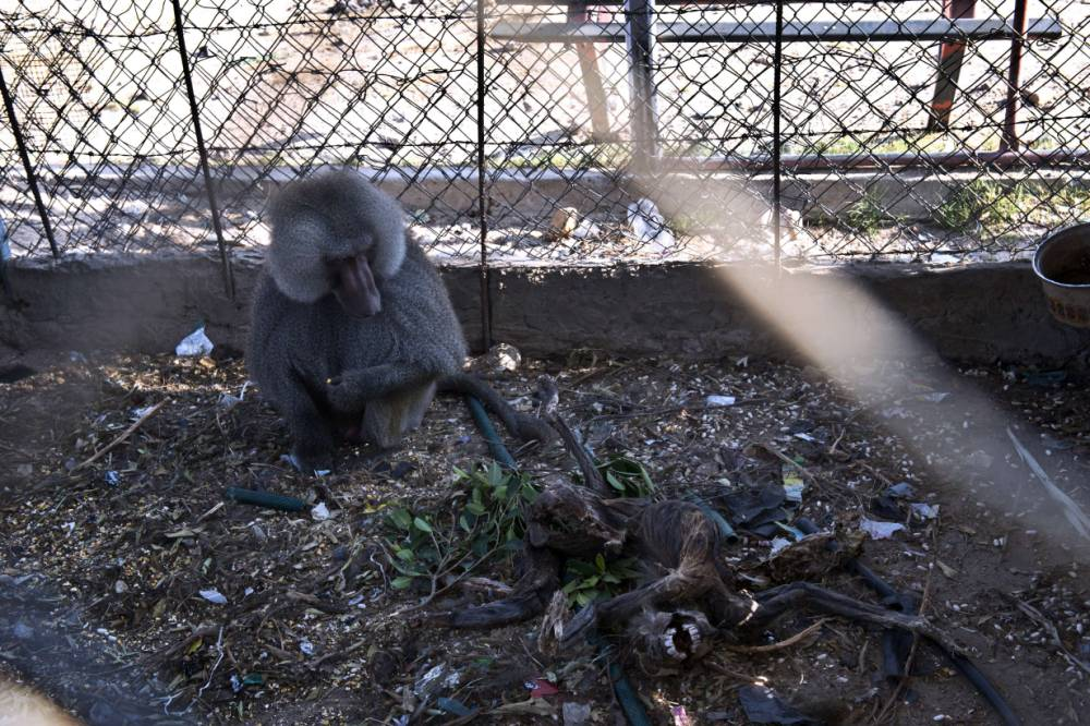 Caught in the crossfire, the animals trapped in Gaza's Bisan City zoo