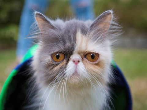 Is this the world's saddest-looking cat?
