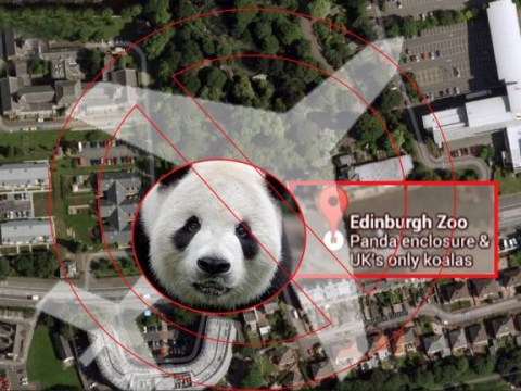 Shhh! Pilots told to avoid Edinburgh Zoo so they don't disturb Tian Tian the giant panda