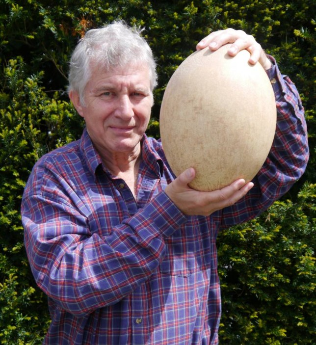 MYEGG - Summers Place Auctions in Billingshurst, West Sussex are hoping to fetch £50,000 pounds when the largest egg in the world goes under the hammer. The extinct elephant bird egg, being sold on behalf of a mystery bird egg collector, is more than a foot in length and is large enough to hold the contents of 100 chicken eggs. Picture - Summers Place Auctions curator Errol Fuller holding the egg.  M&Y News Agency, Portsmouth, 02392 820311