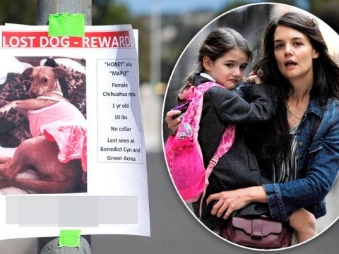 Katie Holmes stumps up $1,000 reward for safe return of daughter Suri Cruise's missing pet chihuahua Honey