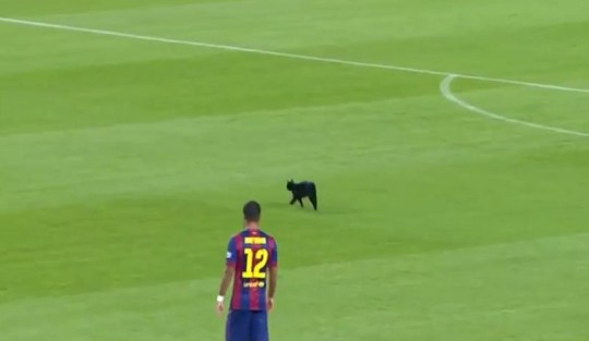 A cat invaded the Nou Camp pitch during Barcelona's game with Elche (Picture: YouTube)
